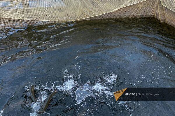 Рыбное хозяйство на озере Имандра - Sputnik Армения