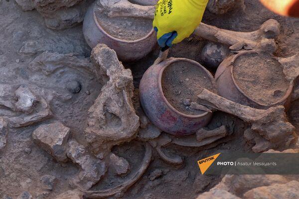 Кости человека и животных, обнаруженные во время археологических раскопок в некрополе Неркин Навер в Арагацотнской области. Гробница относится к эпохе средней бронзы. - Sputnik Армения