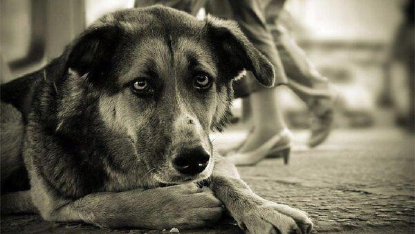 Бездомная собака - Sputnik Армения