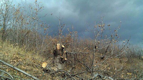деревья Национальный парк Аревик ущерб природа Сюник пень - Sputnik Армения