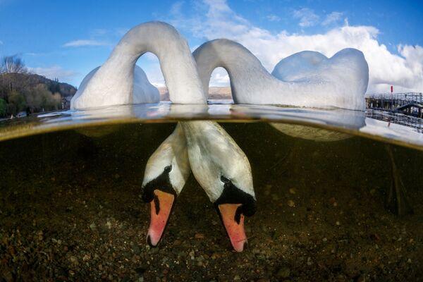 British Waters անվանակարգում հաղթած բրիտանացի լուսանկարիչ Grant Thomas–ի  «Love Birds» լուսանկարը։ - Sputnik Արմենիա