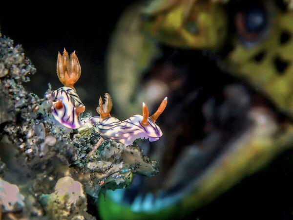 Up & Coming անվանակարգում հաղթած մալայզիացի լուսանկարիչ Man BD–ի «ROAR»  լուսանկարը։ - Sputnik Արմենիա