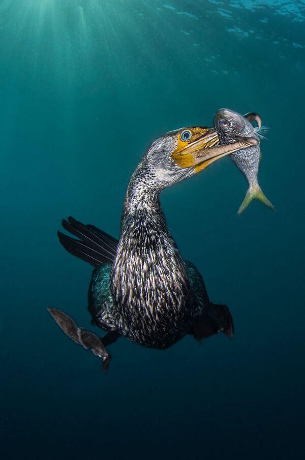 Behaviour անվանակարգում հաղթած իտալացի լուսանկարիչ Filippo Borghi–ի «The Fisherman» լուսանկարը։ - Sputnik Արմենիա