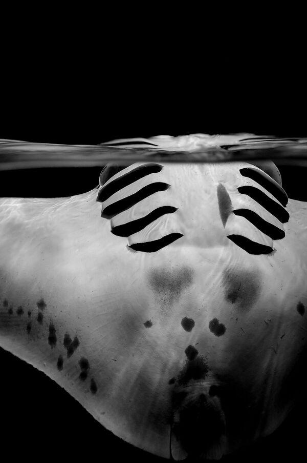 Black & White  անվանակարգում երկրորդ տեղը զբաղեցրած շվեյցարացի լուսանկարիչ Sylvie Ayer–ի «Graceful manta» լուսանկարը։ - Sputnik Արմենիա