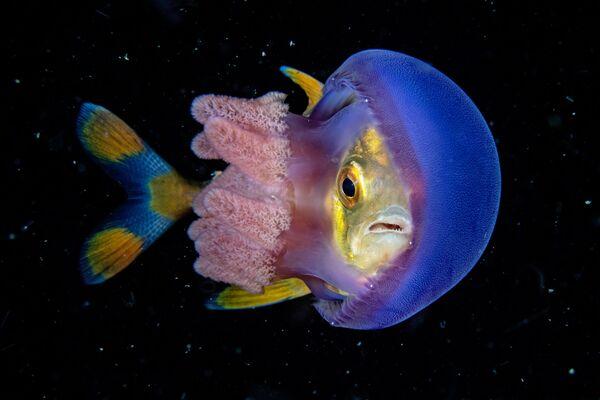 Wide Angle անվանակարգում երկրորդ տեղը զբաղեցրած ֆիլիպինցի լուսանկարիչ Scott Gutsy Tuason–ի «In Hinding» լուսանկարը։ - Sputnik Արմենիա