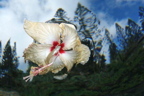 Compact անվանակարգում երկրորդ տեղը զբաղեցրած լուսանկարիչ Jack Berthomier « Flower power» լուսանկարը։ - Sputnik Արմենիա