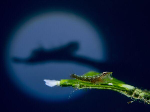Macro անվանակարգում երրորդ տեղը զբաղեցրած մալայզիացի լուսանկարիչ Kenji Cheow–ի «The Shadow» լուսանկարը։ - Sputnik Արմենիա