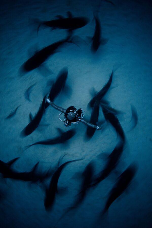 Wide Angle անվանակարգում երկրորդ տեղը զբաղեցրած չինացի լուսանկարիչ Fan Ping–ի «Surrounded»  լուսանկարը։ - Sputnik Արմենիա