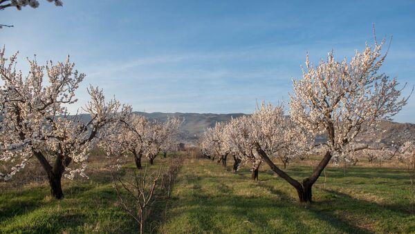 Весна в селе Уджан, Арагацотн - Sputnik Արմենիա