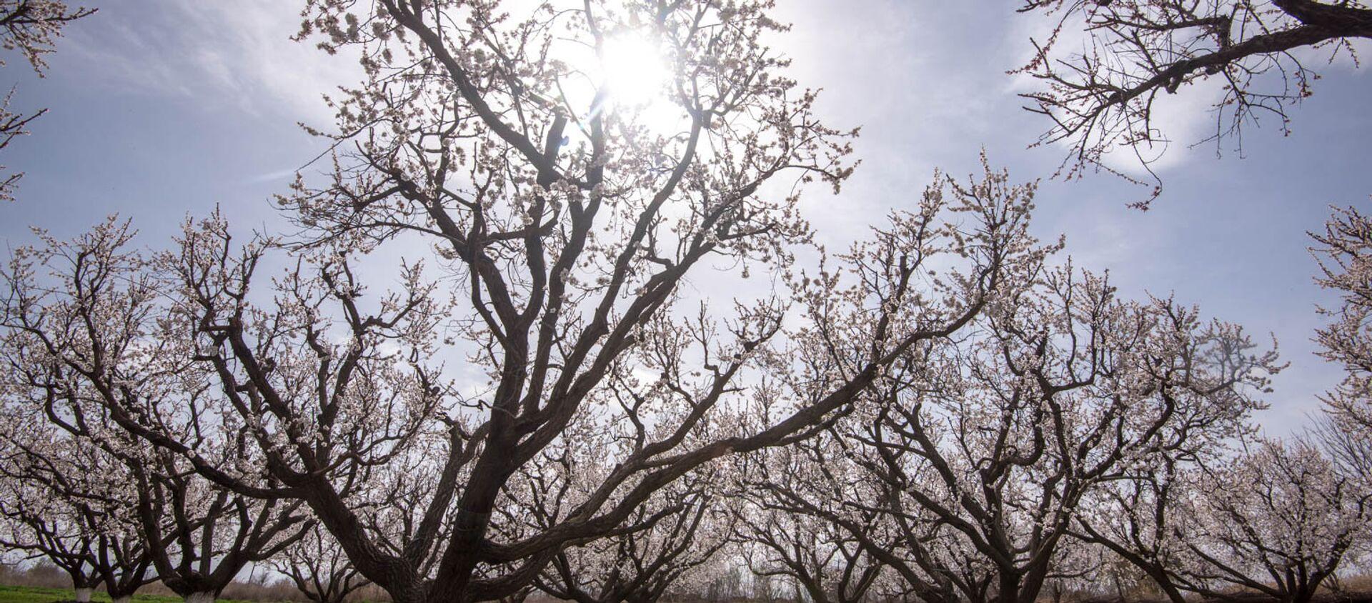 Весна в селе Джанфида, Армавир - Sputnik Армения, 1920, 20.03.2021