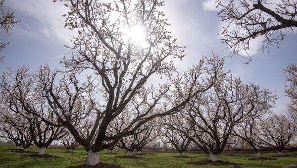 Весна в селе Джанфида, Армавир - Sputnik Армения