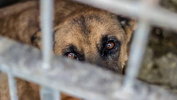 Собака в Юниграф-Икс - Sputnik Армения