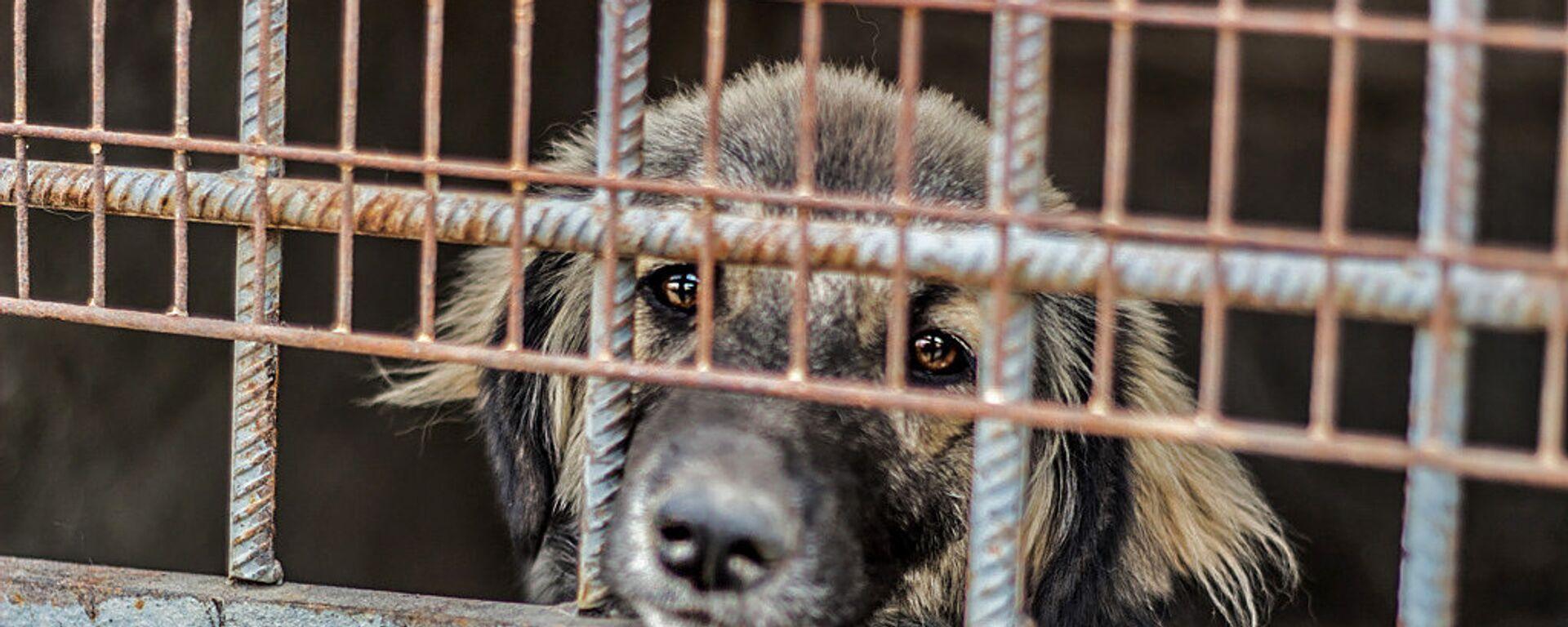 Собака в Юниграф-Икс - Sputnik Армения, 1920, 29.06.2018