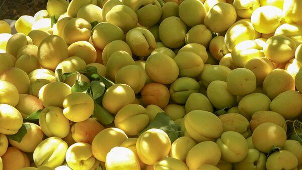 Армянский фермер Саен Погосян рассказывает об урожае абрикоса - Sputnik Արմենիա