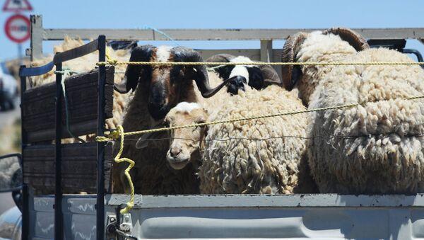 Бараны и овцы в кузове грузовика - Sputnik Արմենիա