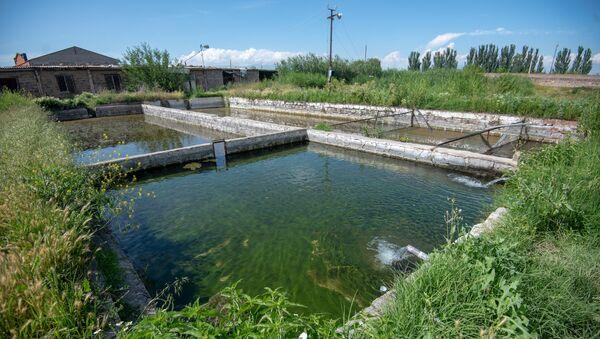 Бассейны рыбного хозяйства, село Гай, Армавирская область - Sputnik Армения