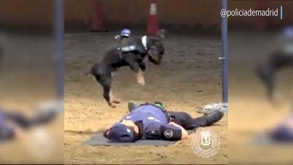 Массаж сердца от полицейской собаки - Sputnik Армения