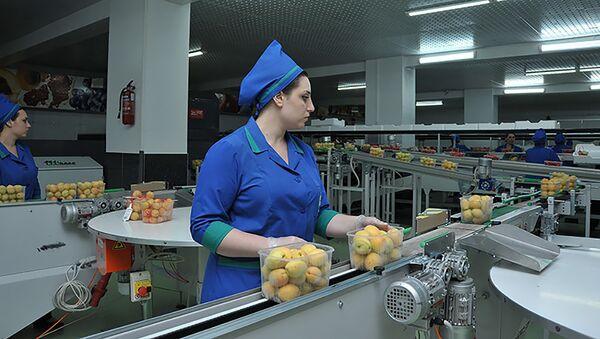 Производственная линия для сортировки фруктов и овощей компании Spayka - Sputnik Армения