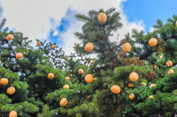 Արևը, ծիրանը և մարդկանց ժպիտները. Մոսկվայում նշեցին «Ծիրանի» տոնը - Sputnik Արմենիա