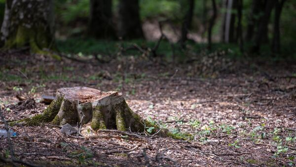Дилижанский национальный парк - Sputnik Արմենիա