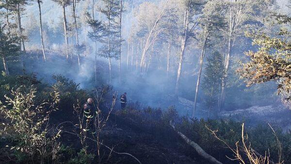 Пожар в лесу в Хашурском районе - Sputnik Армения