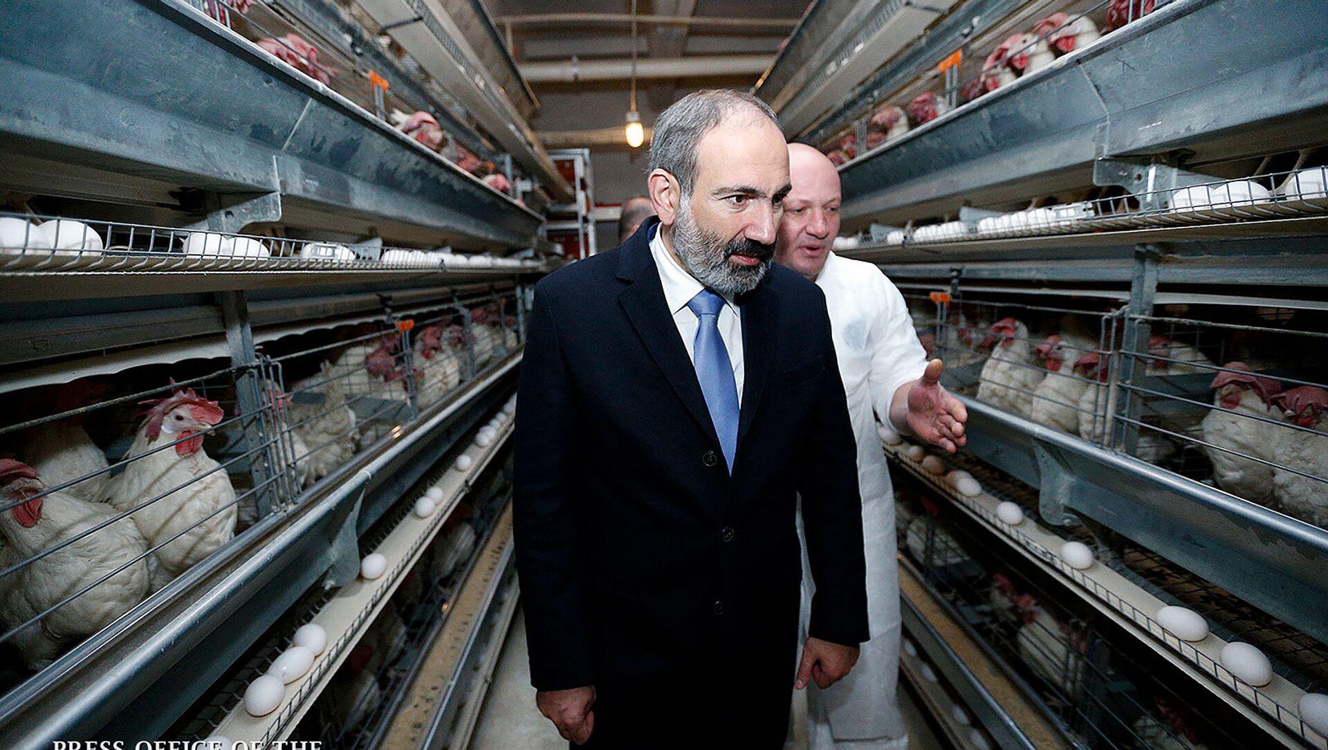 И.о. премьер-министра Никол Пашинян посетил фермерское хозяйство в Апаране (21 ноября 2018). Арагацотн - Sputnik Արմենիա, 1920, 16.04.2021