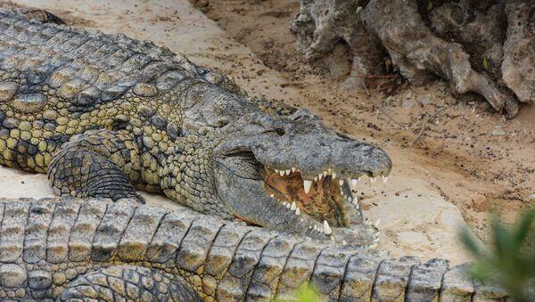 Крокодиловая ферма в городе Хумт-Сук на острове Джерба в Тунисе. - Sputnik Армения