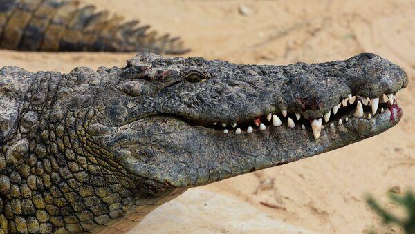 Крокодил - Sputnik Армения