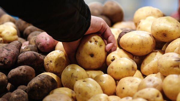 Картофель на прилавке - Sputnik Армения