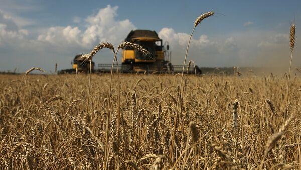 Уборка зерновых на Юге России - Sputnik Армения