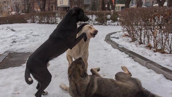 Бродячие собаки - Sputnik Армения