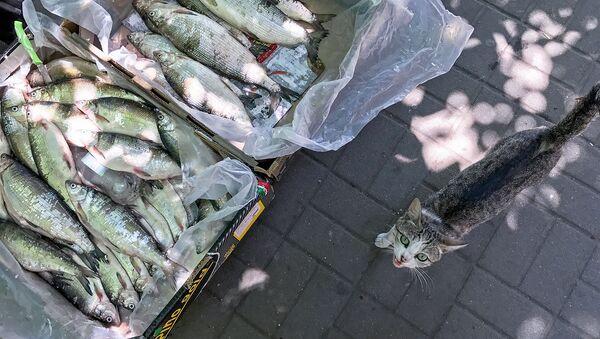 Уличная продажа рыбы - Sputnik Արմենիա