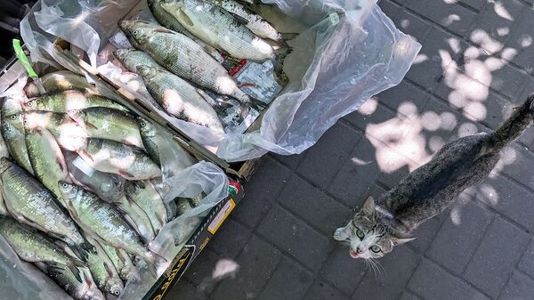 Уличная продажа рыбы - Sputnik Армения