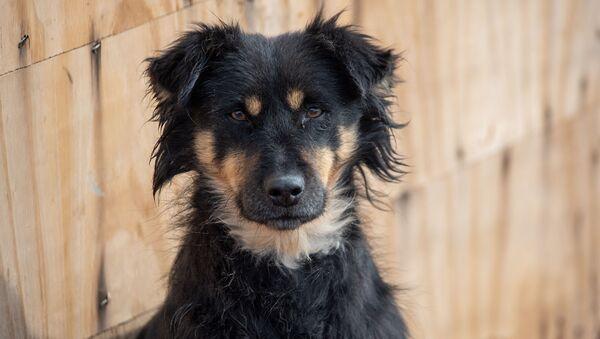 Собачий приют Агарак - Sputnik Армения