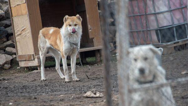 Собачий приют Агарак - Sputnik Արմենիա