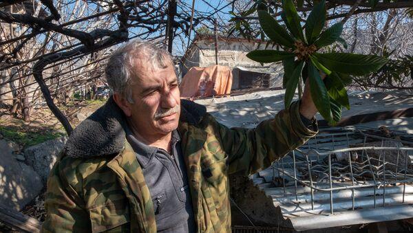 Житель города Мегри Микаэл Цатрян с цветущей мушмулой - Sputnik Армения
