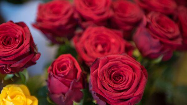 Վարդեր - Sputnik Արմենիա