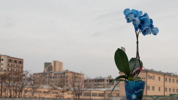 Орхидея - Sputnik Արմենիա
