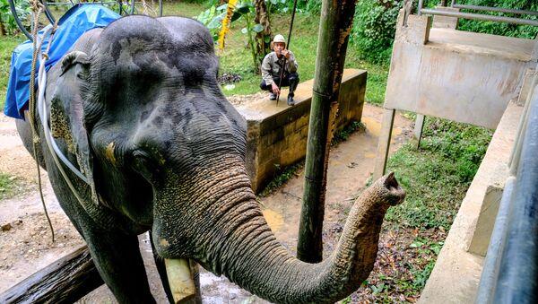 Слон в окрестностях национального парка Као Сок в провинции Сураттани. - Sputnik Армения