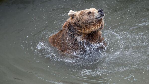 Медведи Ереванского зоопарка - Sputnik Արմենիա