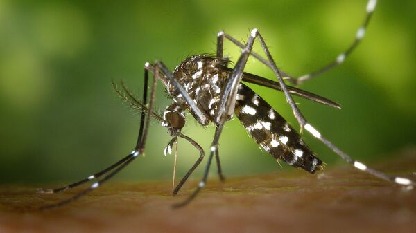 Тигровый комар - Sputnik Արմենիա