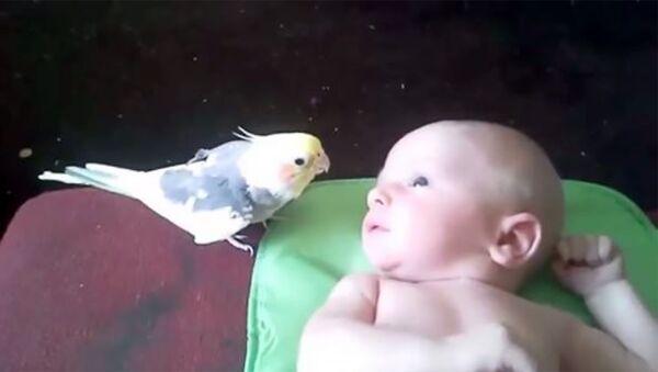 Просто чудо! Попугай поёт для малыша! - Sputnik Армения