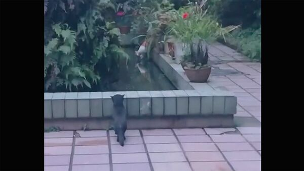 Мокрое преступление черного кота - Sputnik Армения