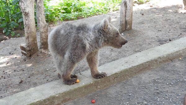 Медвежонок в Дилижанском национальном парке - Sputnik Армения