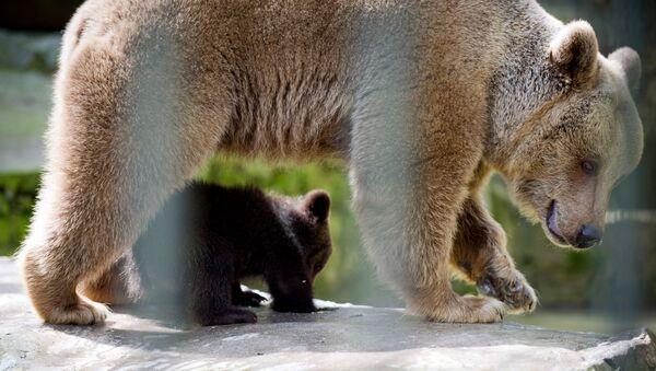 Медведица и медвежонок - Sputnik Արմենիա