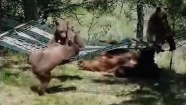 Медвежата на гамаке - Sputnik Армения