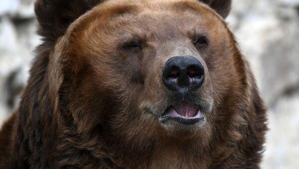 медведь  - Sputnik Արմենիա