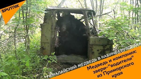 Косолапый водитель - Sputnik Армения