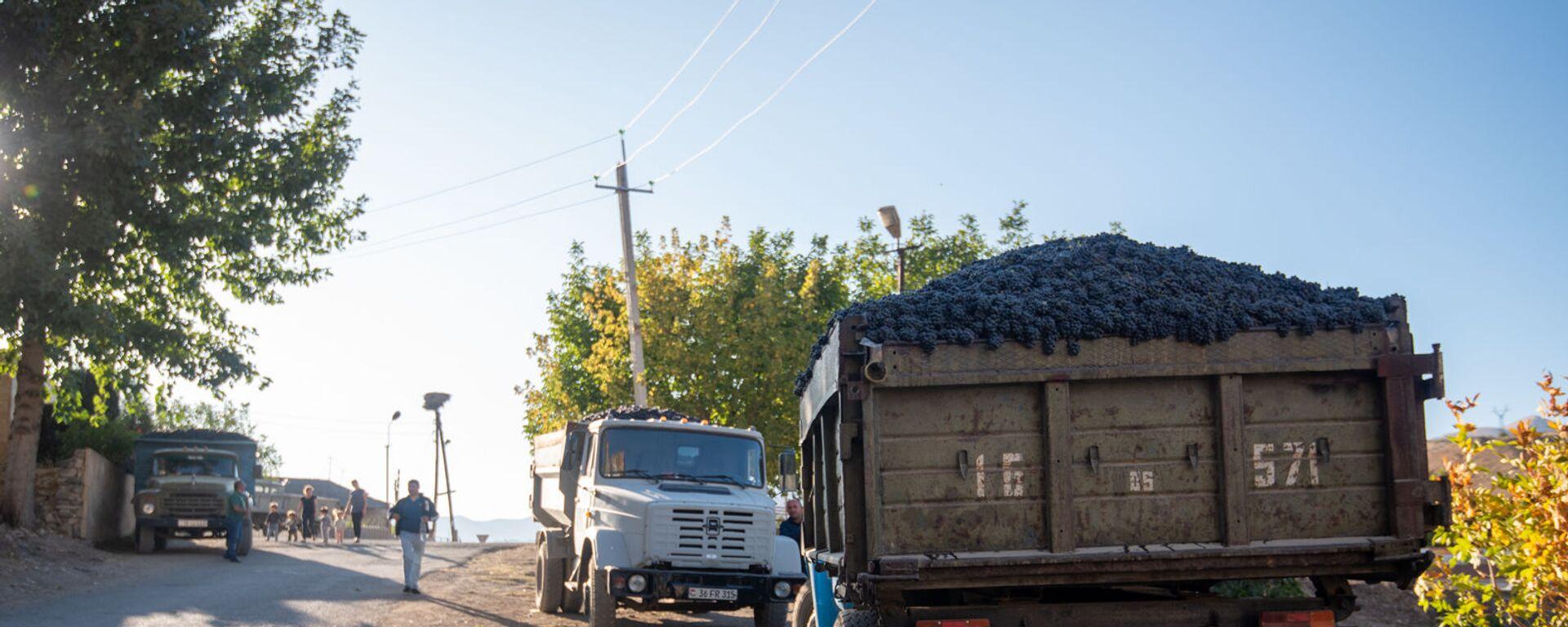 Сбор и закупка винограда в селе Ахавнадзор - Sputnik Армения, 1920, 15.09.2021