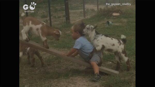 Козлята играют с мальчиком - Sputnik Армения